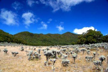 Fakta Tentang Gunung Pangrango Yang Wajib Kalian Tahu
